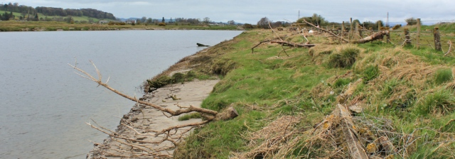 14 driftwood on bank, River Nith, Ruth hiking to Dumfries, Scotland