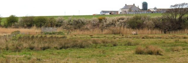 25 bridge near Dornock, Ruth Livingstone's coastal walk