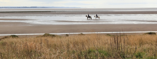 25 horses on the Solway Firth, Ruth's coastal walk, Dumfries and Galloway