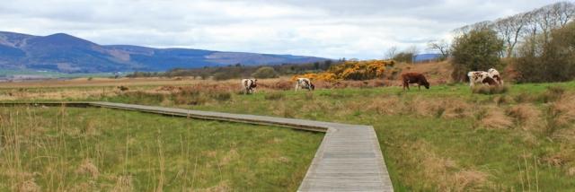 26 walkway across Caerlaverock Merse, Ruth Livingstone in Scotland