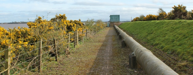 32 old railway embankment, Seafield, near Annan, Ruth Livingstone
