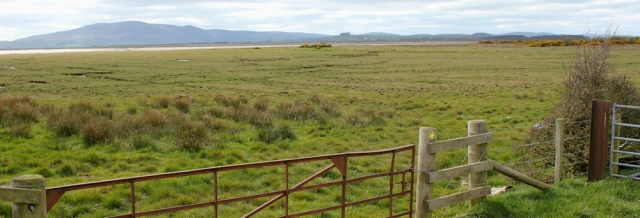 33 marsh, Ruthwell, Ruth's coastal walk, Dumfries and Galloway