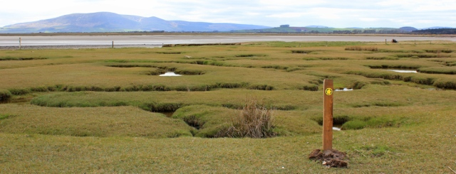 34 more marsh, Ruth's coastal walk, Dumfries and Galloway