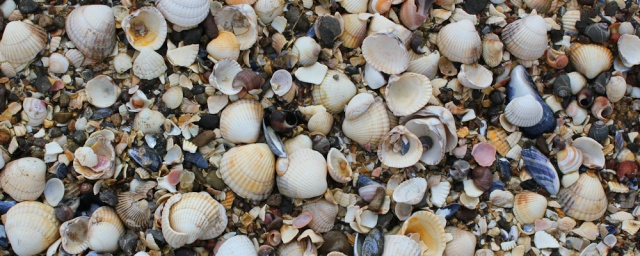 35 beach of shells, Ruth walking in Dumfries and Galloway