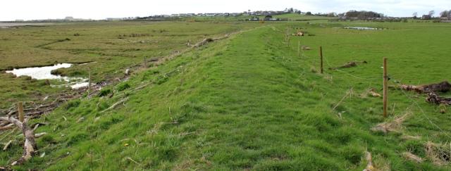 35 marsh bank to River Annan, Ruth's coastal walk, Dumfries and Galloway