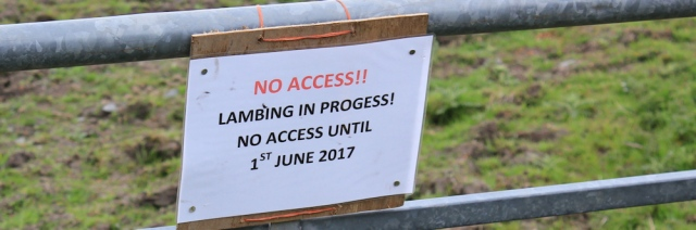 03 no access, Lambing, 02 naughty goats, Ruth's coastal walk, Southwest Scotland