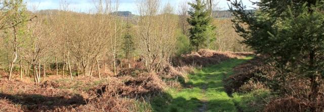 04 Torr Wood, Ruth coastal walk, Dumfries and Galloway