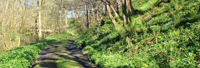04 woodland Track, Netherlaw wood, Ruth's coastal walk Dumfries and Galloway
