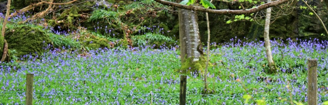 11 forbidden bluebell woods, Ruth hiking through Dumfries and Galloway