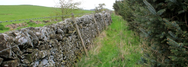 11 pine plantation, Ruth hiking in Scotland