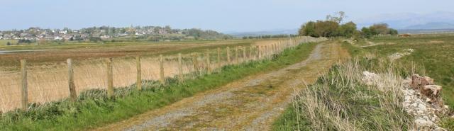 13 no way to Wigtown, 02 naughty goats, Ruth's coastal walk, Southwest Scotland
