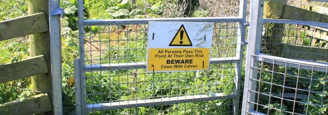 13 warning sign, cows on the Core Path, Ruth Livingstone