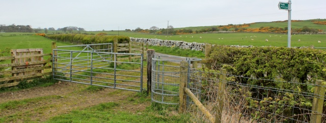 14 path to Borness coast, Ruth walking the coast of Scotland to Gatehouse of Fleet