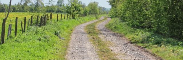 15 core path to Balfern, 02 naughty goats, Ruth's coastal walk, Southwest Scotland