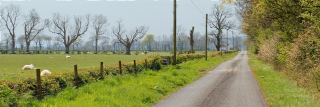 15 line of dead trees, Ruth hiking to Wigtown, The Machars, Scotland