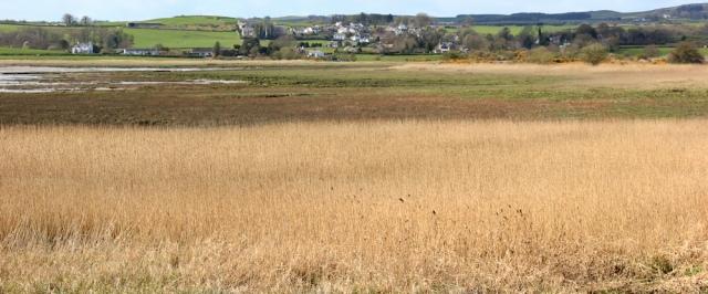 16 Auchencairn through the marsh, Ruth's coast walk, Dumfries and Galloway