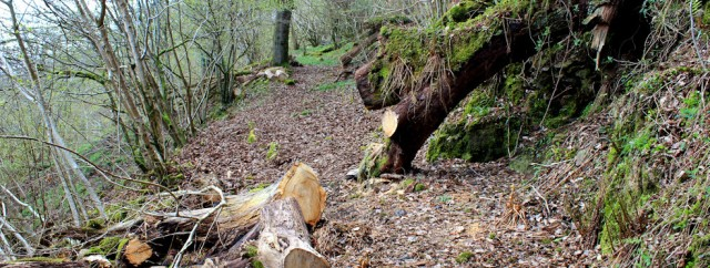 16 fallen trees, walking around Castle Hill, Almorness House, Ruth hiking in Dumfries and Galloway