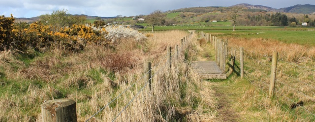 17 marsh path, Ruth's coast walk, Dumfries and Galloway