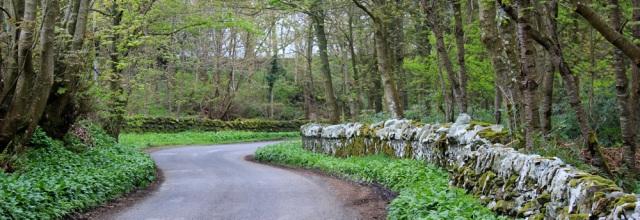 23 Doon Wood, Knockbrex, Ruth's coastal walk, Dumfries and Galloway