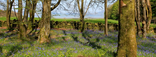 24 sea and blue bells, Ruth's coastal walk, Dumfries and Galloway, Scotland