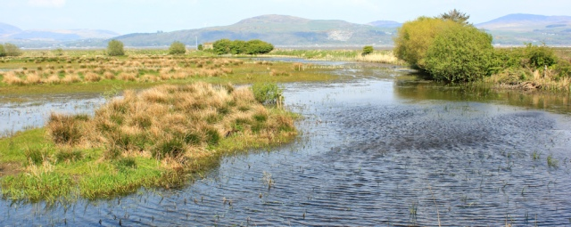 27 high tide, Wigtown Harbour, Ruth Livingstone in Scotland