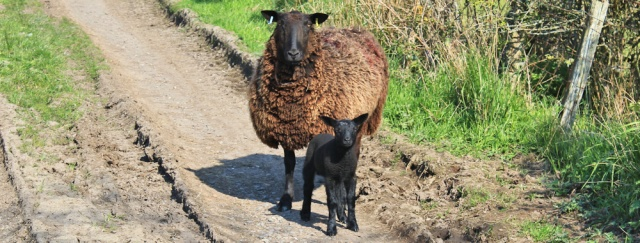 31 Black Sheep, Ruth Livingstone