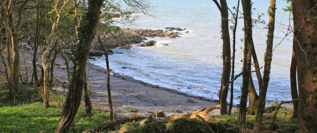 33 shore walk through woods to Garlieston, RUth Livingstone in Scotland