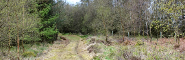 33 track through woods, Ruth's coastal walk, Dalbeattie, Scotland
