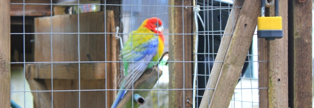 34 parrot in cage, Cally Mains, Ruth hiking up Fleet Bay