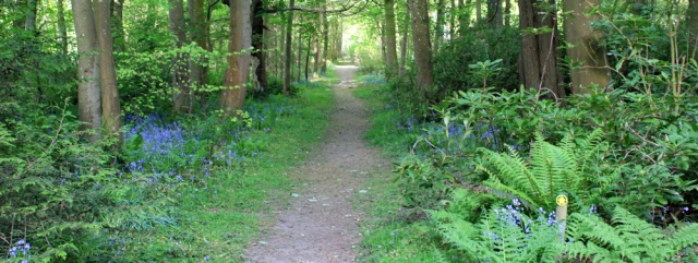 03 footpath through Ardwell House woodlands, Ruth hiking The Rhins, Galloway
