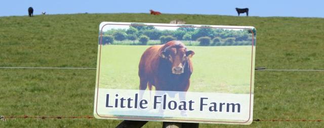13 Little Float Farm bull, Ruth hiking through The Rhins, Galloway, Scotland