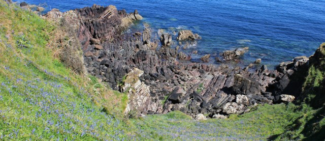 16 bluebells, rocks and sea, Ruth Livingstone hiking in Scotland
