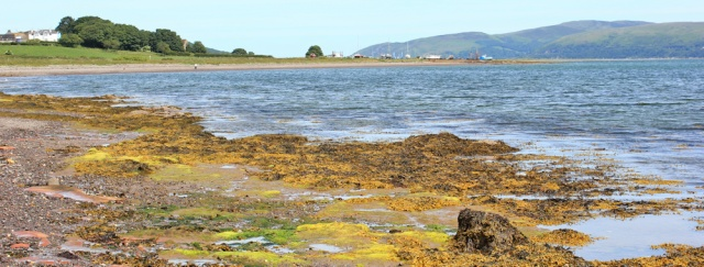 18 vibrant shore, Loch Ryan, Ruth's coastal walk, Stranraer