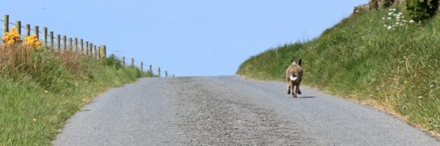 25 running hare, Ruth Livingstone