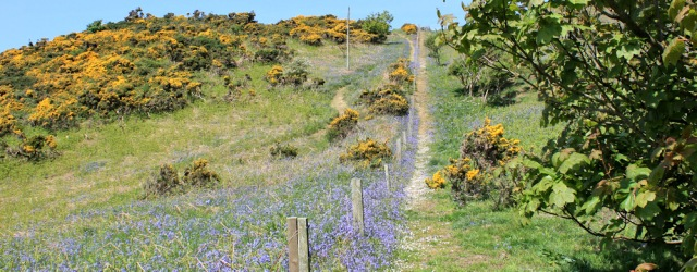 32 path up hill, Ruth hiking to Portpatrick, Galloway, Scotland