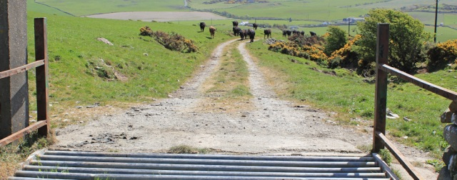 35 second cattle grid, Ruth's coastal walk, The Rhins, Scotland