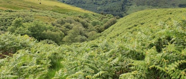 38 mull of galloway trail, Ruth Livingstone, Scotland
