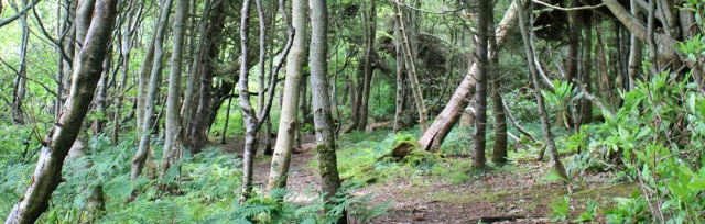 06 woodland walk, Culzean Castle, Ruth hiking to Ayr, Scottish Coast