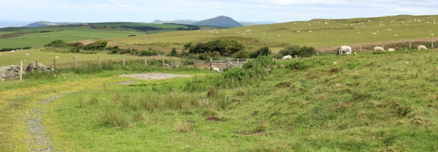 12 track through sheep fields, Ruth hiking the Ayrshire Coastal Path, Scotland