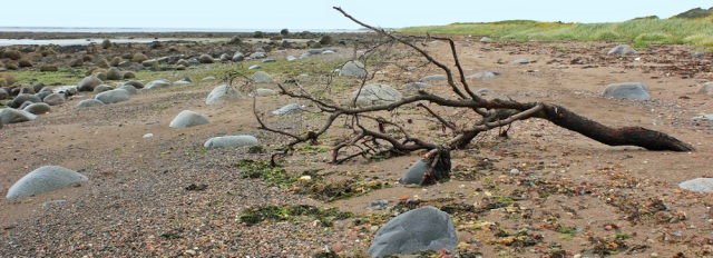 26 driftwood on beach, Ruth Livingstone walking the Ayrshire Coastal Path