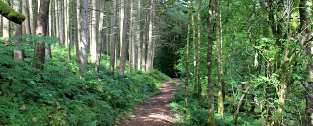 05 footpath through woods, Glenashdale Burn, Ruth walking around Arran
