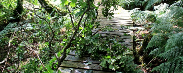 11 fallen trees, Ruth Livingstone's coastal walk