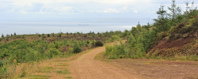 11 logging track, core path towards Giants Graves, Whiting Bay, Ruth Livingstone