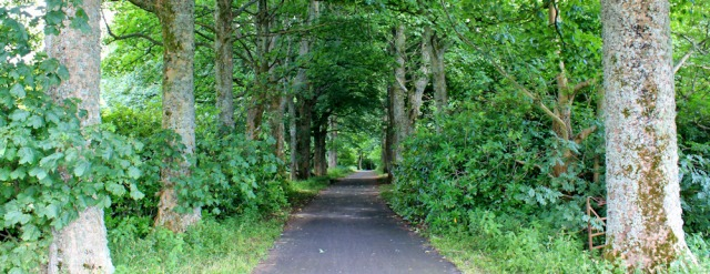 32 cycle route through woods, Ruth walking to Fairlie, Ayrshire, Scotland