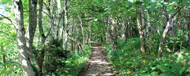 31 path through wood to Lagg, Ruth's coastal walk, Isle of Arran
