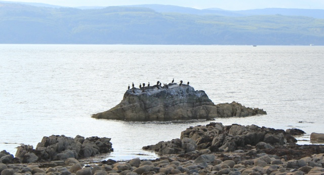 37 cormorants and Mull of Kintyre, Ruth hiking in Scotland