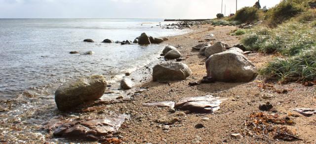 04 rocky shore, Arran, Ruth Livingstone