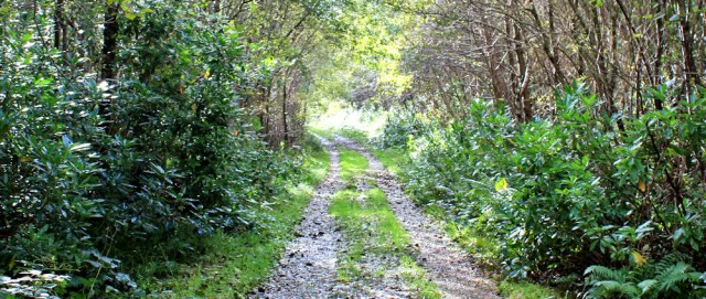 18 path up into the woods, Ruth Livingstone