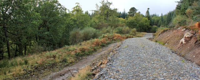 24 logging track through Merkland Wood, Ruth hiking on Arran