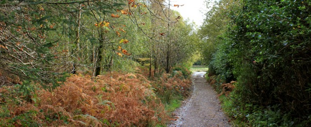 34 autumn colours, Merkland Wood, Ruth hiking on Arran